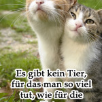 Es gibt kein Tier, für das man so viel tut, wie für die Katz.