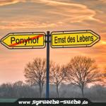 Ponyhof - Ernst des Lebens