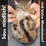 Katzenfotos - So niedlich sind kleine Miezekatzen