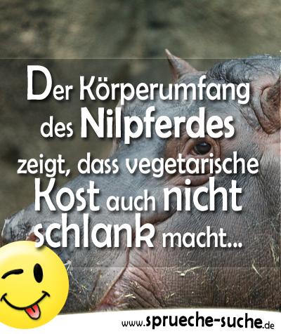 Der Körperumfang des Nilpferdes zeigt, dass vegetarische Kost auch nicht schlank macht...