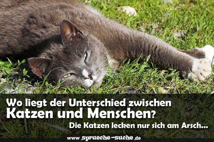 Sprüche über Katzen Wo liegt der Unterschied zwischen Katzen und