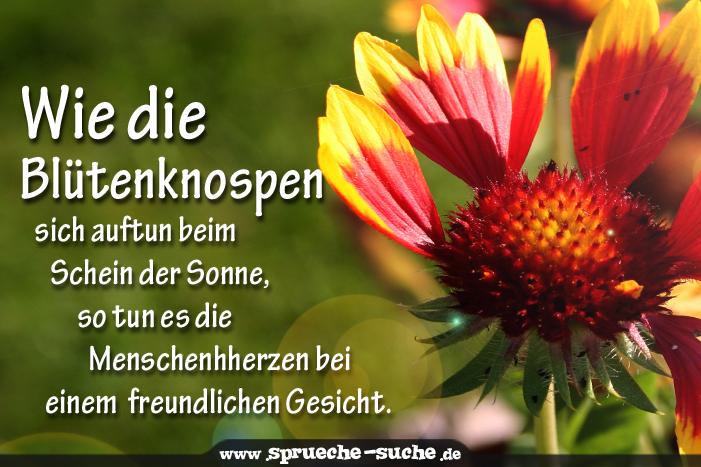 freundlichkeit sprüche Sprüche Freundlichkeit   Wie die Blütenknospen sich auftun beim  freundlichkeit sprüche
