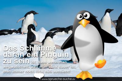 Bild mit lustigem Spruch über Pinguine