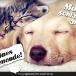 Spruch zum Wochenende mit zwei Katzen und einem Hund