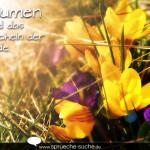 Blumen sind das Lächeln der Erde.
