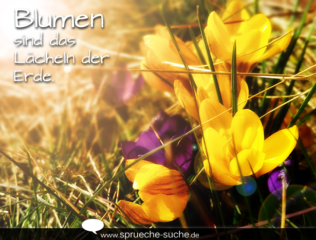 Sprüche Blumen Sind Das Lächeln Der Erde Sprüche Suche