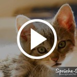 Katzen miauen im Tonstudio nach River flows in you von Yiruma