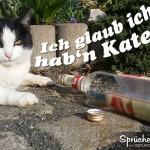 Spruchbild: katzenkater liegt müde vor leerer Flasche