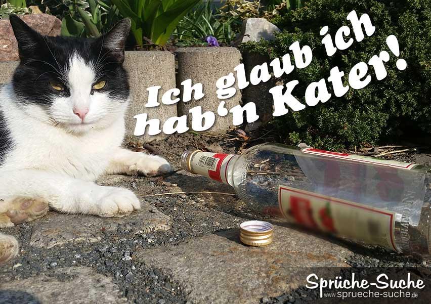 Pin Lustige Katzen Lustige Katzenbilder Lustige Katzenfotos on ...