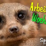 Spruchbild mit Erdmännchen - Schönes Wochenende