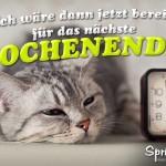 Spruchbild mit müder grauen Katze
