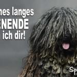 Spruchbild zum verlängerten Wochenende mit Hund