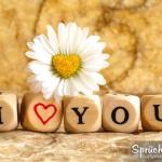 Spruchbild mit Gänseblümchen und dem Schriftzug I LOVE YOU aus Würfeln
