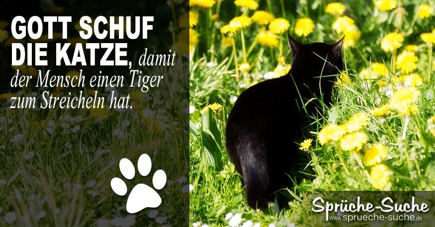 Katze Tiger Spruch Sprüche Suche