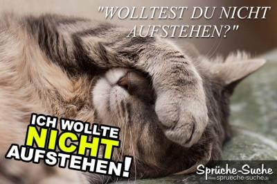 Spruchbild mit schlafender Katze
