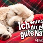Gute nacht Sprüche mit schlafenden Hund