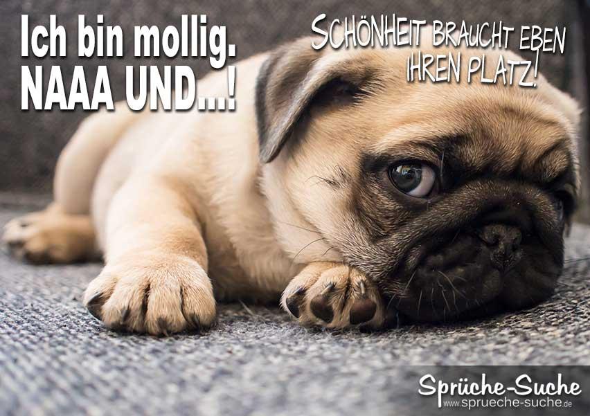 Lustiger Spruch Mit Hund Schonheit Braucht Platz Spruche Suche