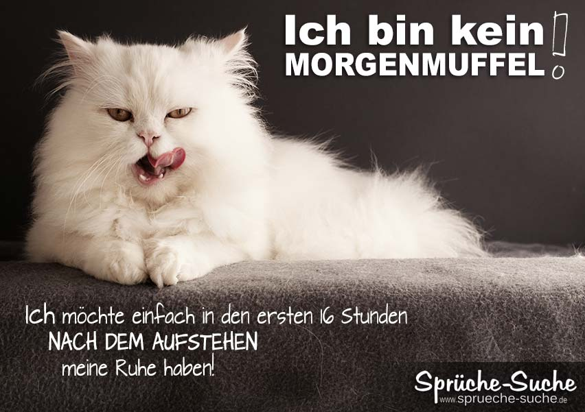 perserkatze morgenmuffel spruch spr che suche. Black Bedroom Furniture Sets. Home Design Ideas