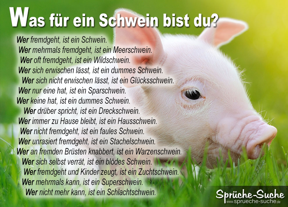 Sprüche Was für ein Schwein bist du   Sprüche Suche