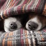 2 Hunde liegen unter der Decke, nur die Nasen schauen noch raus
