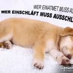 Lustiger Spruch übers Ausschlafen mit schlafenden Hundewelpen