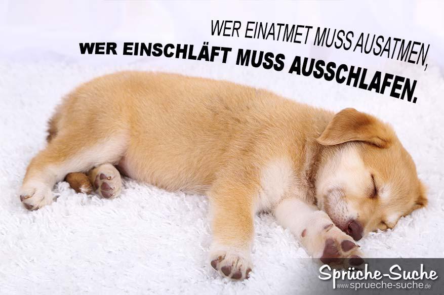 Lustiger Spruch Zum Wochenende Mit Hund Ausschlafen Spruche Suche