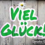 Viel Glück in Grün-Weiß auf Holzwand geschrieben mit Gänseblümchen