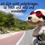 Aufmunternder Spruch - Hund mit roter Sonnenbrille