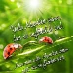 Zwei Marienkäfer auf Grashalm leckend an Wassertropfen - Spruchbild über Glück