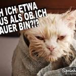 Naße Katze in Decke gehüllt