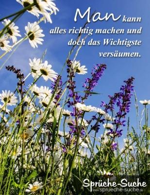 Blumenwiese bei Sonnenschein als Spruchbild
