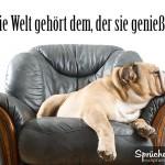 Hund macht Schläfchen auf Sofasessel als Spruchbild für Glück