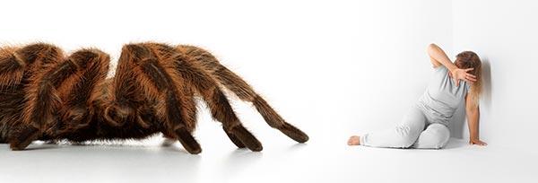 Angst vor Spinnen: Rießige Vogelspinne läuft auf verängstigte Frau zu