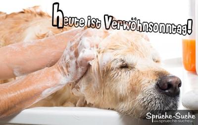 Hund genießt Sonntags seinen Waschtag