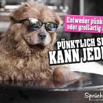 Cooler Hund mit Sonnenbrille nimmt ein Bad Spruchbild