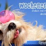 Cooles Spruchbild mit schlafenden Hund mit rosa Brille zum Wochenende