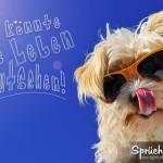 Lebensfrohes Spruchbild - Hund mit Sonnenbrille und Zunge in der Nase