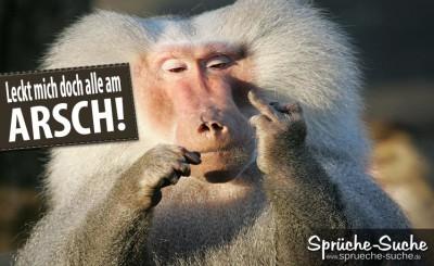 Ein Pavian zeigt den Stinkefinger als lustiges Spruchbild