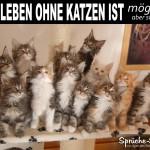 Viele kleine Katzen als lustiges Spruchbild