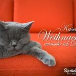 Katze schläft auf rotem Sofa - Spruch zu Weihnachten