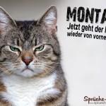 Schöner Spruch mit Katze über den gehassten Montag