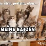 Schöner Spruch für Katzenliebhaber