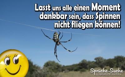 Lustiger Spruch über Spinnen