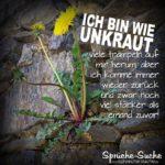 Motivation Sprüche - Unkraut Löwenzahn