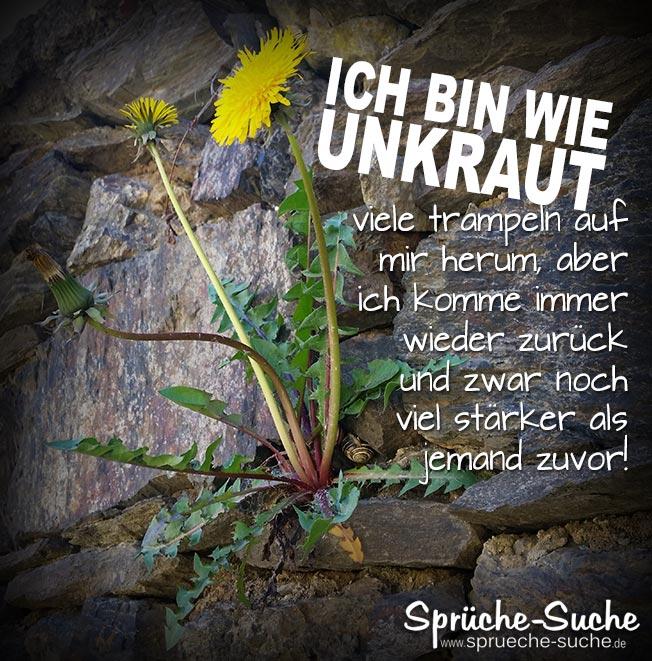 Unkraut Lowenzahn Motivation Spruche Spruche Suche