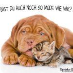 Müde-Spruchbild mit Hund und Katze