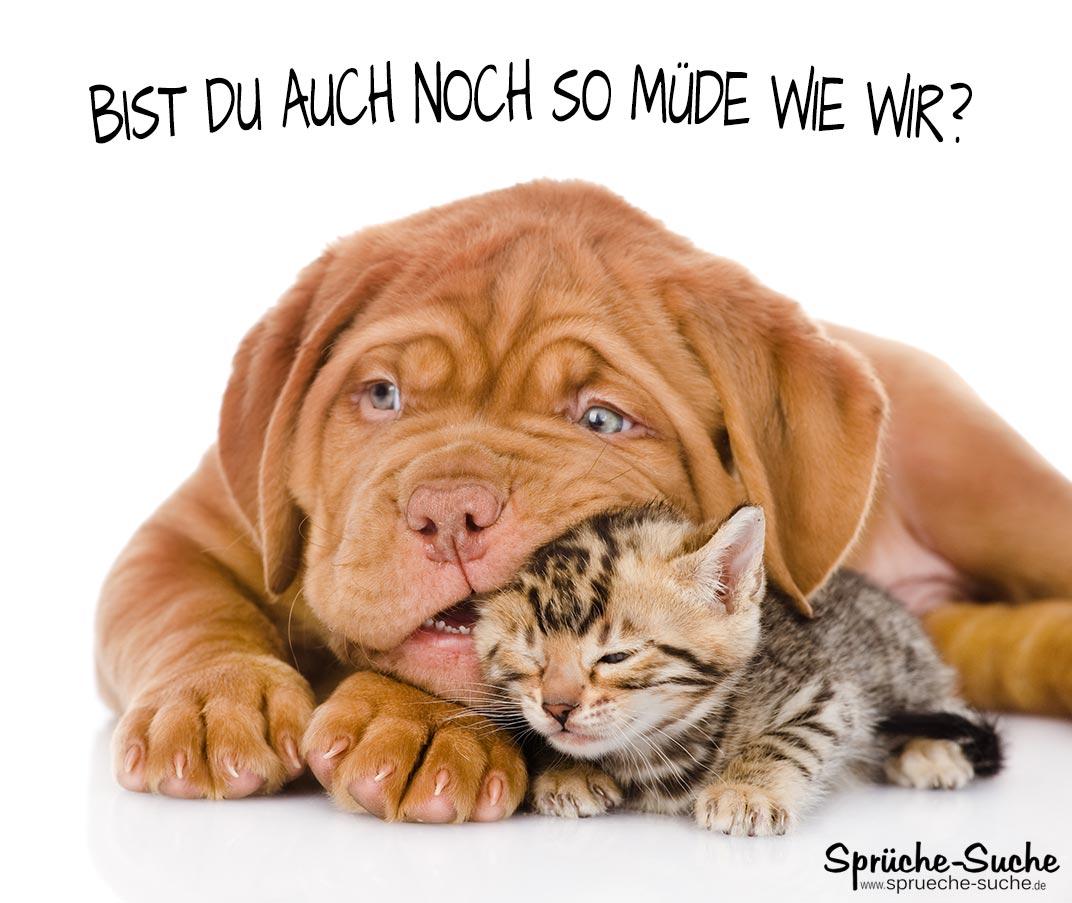 Müde Spruch Hund Und Katze Sprüche Suche