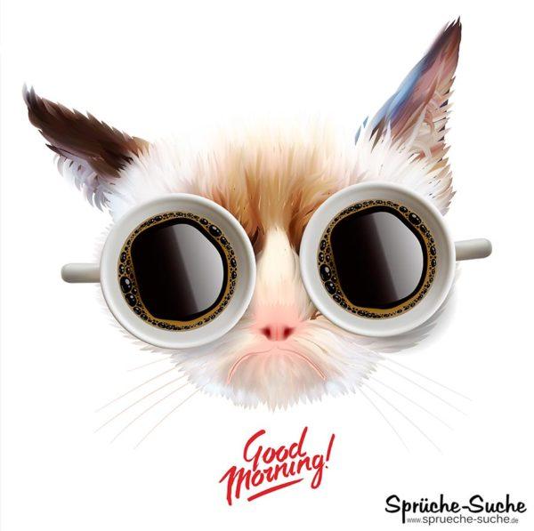 Guten Morgen Spruch mit Katze