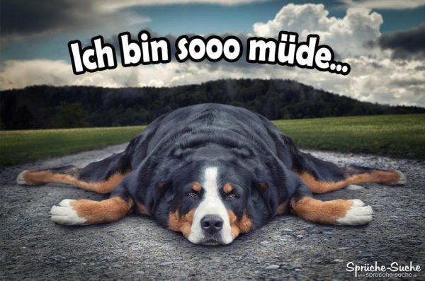 Ich bin müde Sprüche mit Hund