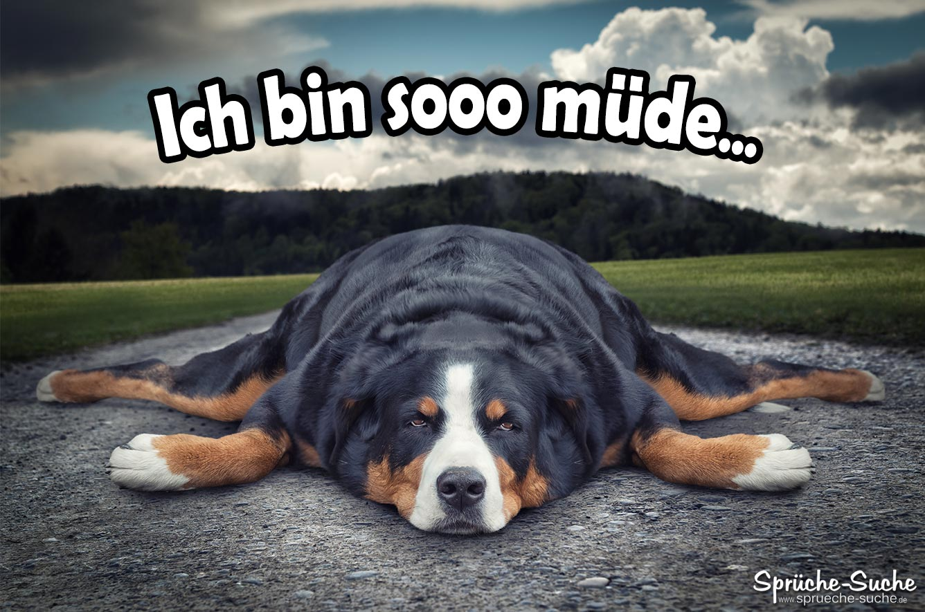 hunde - sprüche-suche